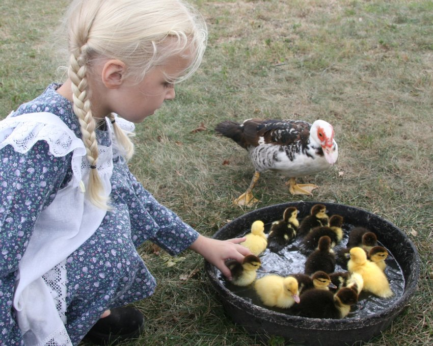 Girl with mother and baby ducks